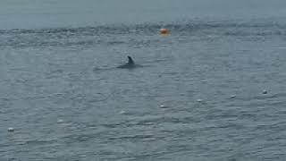 Раннее утро.На пляже Кабардинки дельфины!!!.10.07.2018.