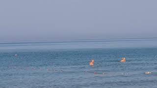 Анапа дельфины 7.40 - 13.07.2018