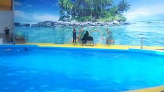 Анапа.Витязево 2017 дельфинарий#2