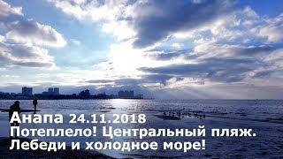 Анапа. Погода 24.11.2018 Потеплело! Центральный пляж. Лебеди и холодное море!