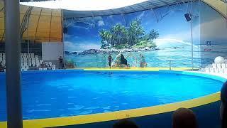 Анапа.Витязево.дельфинарий #1