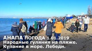 Анапа. Погода 1.01.2019 Народные гуляния на пляже. Купание в море. Лебеди