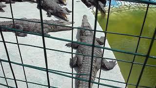 Анапа. Крокодиловая ферма. Июнь 2017 год.