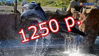 ТОП-5 самых востребованных экскурсий в Анапе с ценами