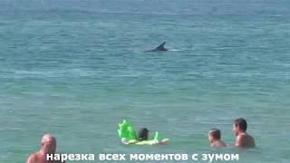 Дельфины очень близко подплывают к людям. Дикий пляж в Витязево.