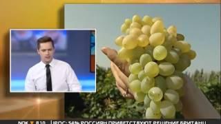 Начальник управления по виноградарству Олег Толмачев: качество вин Кубани — вопрос не сомнительный