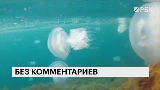 Купаться в Крыму стало опасно: возле берега полно медуз-корнеротов