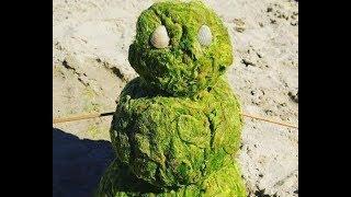 Наступление камки на анапские пляжи началось