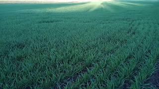 Зачем переезжать в Анапу? Там поля зелёные!