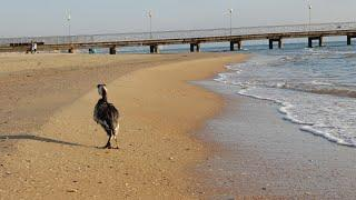 #Витязево пляжи от Витязь до Аквамарина