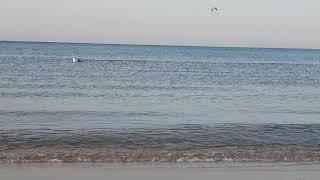 Воздух +12 Море + 13.7 - 7.10 утра 11.10.2018 ГлавДоставка привет