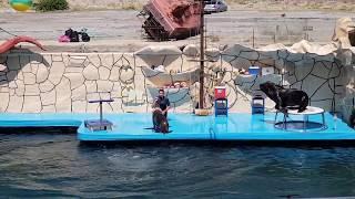 Дельфинайрий Большой Утриш - Полный Обзор