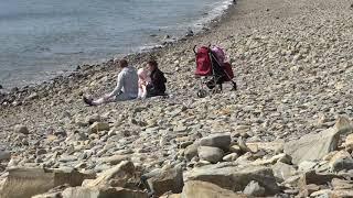 Анапа  видео 21 апреля 2019 года Ореховая роща пляж внизу дельфин у берега моря