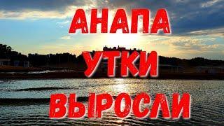 #АНАПА - УТКИ ВЫРОСЛИ - МНОГО РЫБЫ - УТРО НА МОРЕ - 21.06.2019 МОЖЕПСИН