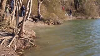 #Веснаванапе Озеро Сукко — пристанище болотных кипарисов близ Анапы 31.03.2019