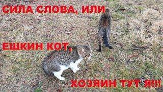 АНАПА 02.02.2019  ЕШКИН КОТ, Я ЗДЕСЬ ХОЗЯИН!!!
