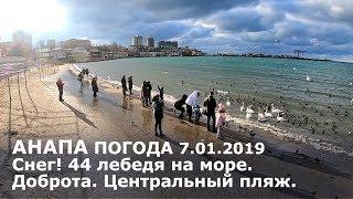 Анапа. Погода 7.01.2019 Снег! 44 лебедя на море. Доброта. Центральный пляж.