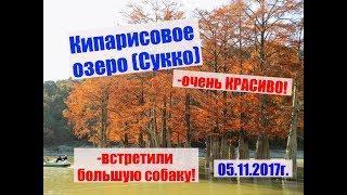 Кипарисовое озеро (Сукко). 05.11.2017г. Cypress.(Sukko)