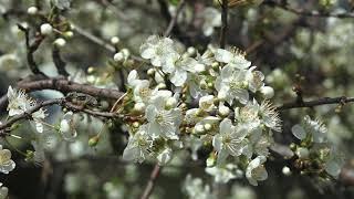 Весна в Сочи! Природа Сочи Деревья в Сочи. Сочи в марте. Климат Сочи субтропики весной