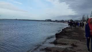Анапа центральный пляж зимой 29.02.2019 лебеди