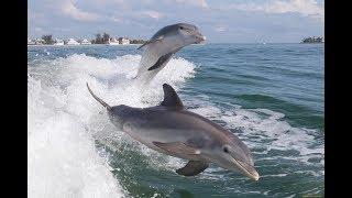 Анапа.Пляж  Малая бухта. Такого больше не увидишь! Сотни дельфинов на кормежке!