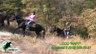Конные прогулки и походы в Сукко и Су - Псех (Анапа)