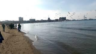 Пляж Анапы в декабре