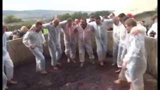 Как в Анапе топчут виноград на вино гости Яниса Каракезиди