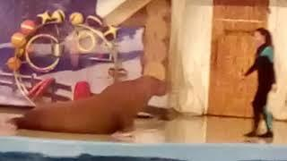 Поездка в Анапский дельфинарий