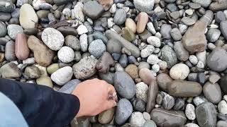 Лоо. Погода 22.10.2017. Лоо центральный пляж и разочарование Светика