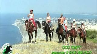 Конные прогулки в Анапе Экскурсии 2016